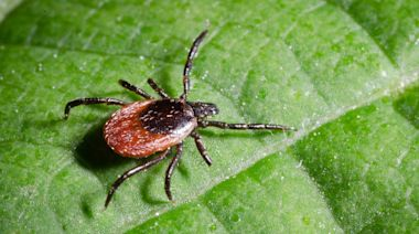 Warning: Ticks Are Posing Higher Risks for People and Pets This Year, Experts Say