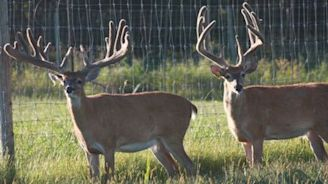 Smith: Wisconsin approved a $100K study on a fatal deer disease, but hunters aren't happy. Here's what to know.