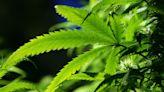 NBA Players Won't Be Subject to Random Marijuana Tests During 2021-22 Season