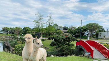 宜蘭綠舞超萌水豚、羊駝、狐獴登場 預計4月底全面開放