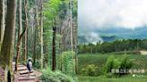 山嵐×竹林,一圓心中武俠夢~雲林五元兩角+杉林步道+雲嶺之丘