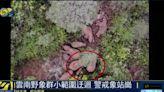 小象獨行7天喊話象群 專家猜「象語」:我找到了風水寶地