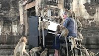 British pianist plays tunes to soothe Thailand's hungry monkeys