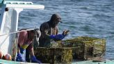 Happy tail: Maine lobstermen crack a good year despite virus