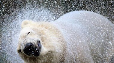 Frigid Weather Causes Lincoln Park Zoo Closure