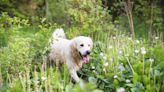 A Guide to Tick Prevention Options for Dogs, Including How to Choose the Right One for Your Pet