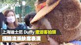上海迪士尼 Duffy 再被遊客拍頭!捂臉流淚缺席表演 - ezone.hk - 網絡生活 - 網絡熱話