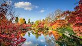 2019日本紅葉情報及景點推介!京都、大阪、東京等最美賞楓熱點