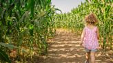 Corny fun: Your ultimate guide to corn mazes in the Miami Valley
