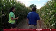 Adventures with Alan visits Diana's Pumpkin Patch and Corn Maze