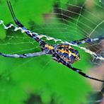 Arachnid by Flickr user V a n z