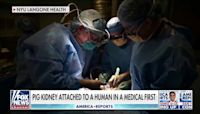 Pig kidney successfully transplanted into human in groundbreaking surgery
