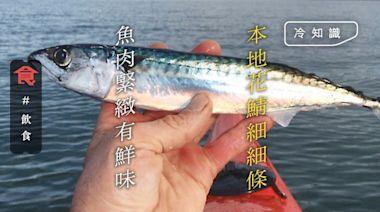 時令鯖魚|五六月當造 本地花鯖魚肉緊緻有鮮味 太平洋鯖魚做壽司 | 蘋果日報