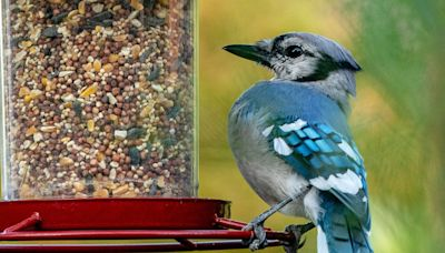 Here's Why You Might Want to Take Down Your Bird Feeders Right Now