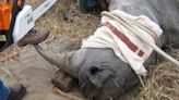 馬來西亞最後一頭蘇門答臘犀牛「伊曼」病逝 全球僅剩不足80隻