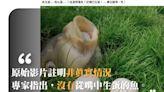 【錯誤】網傳影片宣稱「魚生蛋……魚吐蛋……?這是那種魚?從嘴巴生蛋!……畢生難得一見」?