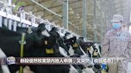 新股優然牧業禁內地人申購?!到底是一場烏龍還是確有其事?