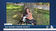 Baltimore Humane Society says Good Morning Maryland