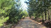 Plantaciones comerciales: ¿la mejor inversión para mitigar el cambio climático?