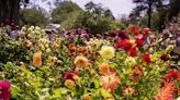 The 6 Magnificent California Gardens Inspiring Us Right Now