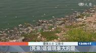 黎巴嫩魚群暴斃 疑湖水遭汙染