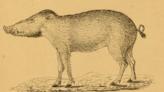 印尼發現史上最古老洞穴藝術 逾4萬5千年的疣豬壁畫重現人間