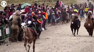 WEB EXTRA: Kids Racing Llamas in Ecuador