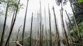 南投景點|北歐風情畫就在竹山祕徑裡 2天1夜的山林小旅行 | 生活 | NOWnews今日新聞