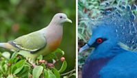 20 Gorgeous Pigeon Breeds We Never Knew Existed