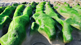 老梅綠石槽~每年3到5月限定版綠色地毯!曾被CNN票選為台灣八大祕境之一