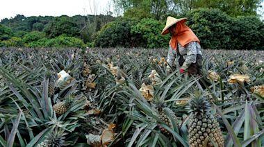 大陸暫停台灣鳳梨輸入,美國政客竟呼籲組「經濟北約」反制