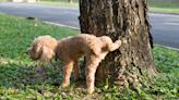 Chicago man ticketed for protecting tree bark from dogs
