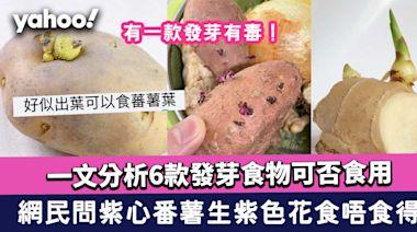 番薯發芽食唔食得?薯仔發芽有毒!一文分析6款發芽食物可否食用