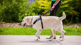 Dog owners face unlimited fine or JAIL for walking pet with wrong equipment