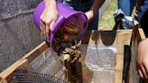 A través del compostaje, los alumnos de la Escuela Cristo Obrero cuidan el ambiente