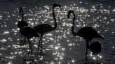 UN biodiversity summit to be delayed for third time – sources