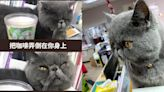 加菲貓化身「臭臉貓Boss」超嗆語錄被狂讚!10張上班族最有感梗圖必看 - 玩咖Playing - 自由電子報