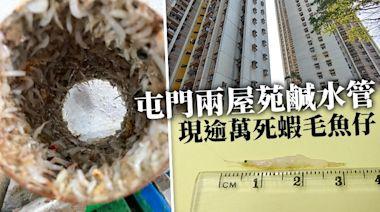 極罕見|屯門兩屋苑鹹水管現逾萬死蝦毛魚仔 過萬名居民受影響 | 蘋果日報