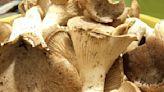Ricette con i funghi cardoncelli al forno: idee sfiziose