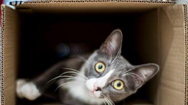 中國救助組織揭「寵物盲盒」殘酷本質,買賣雙方應為生命負上何種責任?|端圓桌|端傳媒 Initium Media