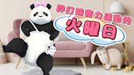 【胖打日記#05】宅在家一起運動吧! Let's exercise at home together !