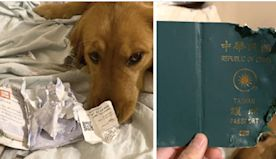 Dog gets ahold of owner's passport and destroys it - just might have saved her life