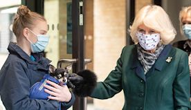 Duchess Camilla makes sweet style nod during Battersea Dogs and Cats Home visit