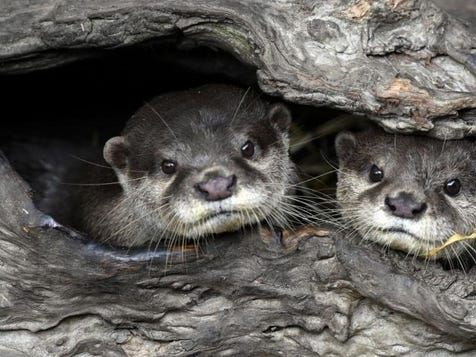 """Good news: Discovery says its new show is like """"Game Of Thrones with otters"""""""