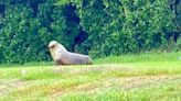New Zealand Closes Down Road for One Month to Allow Sea Lion to Care for Newborn Pup