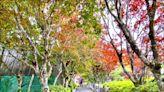 太平山重開園 同時段限千人