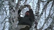 The student climbing trees for better internet