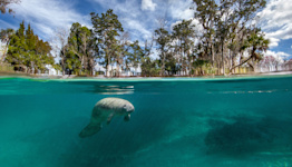 Florida's Manatees Are Dying at Record Rates — Here's How You Can Help
