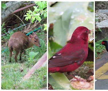 三級警戒至7月12日,各森林遊樂區繼續封 園區成為動物天堂