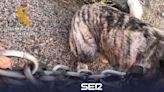 Actuaciones contra el maltrato animal en Trujillo y Torrecillas de la Tiesa